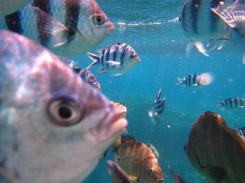 沖縄の真栄田岬を体験ダイビング