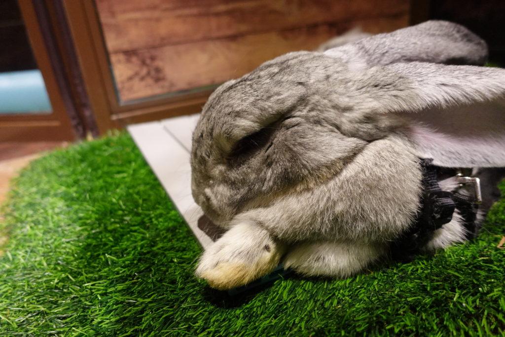 オービィ横浜 ビッグウサギ