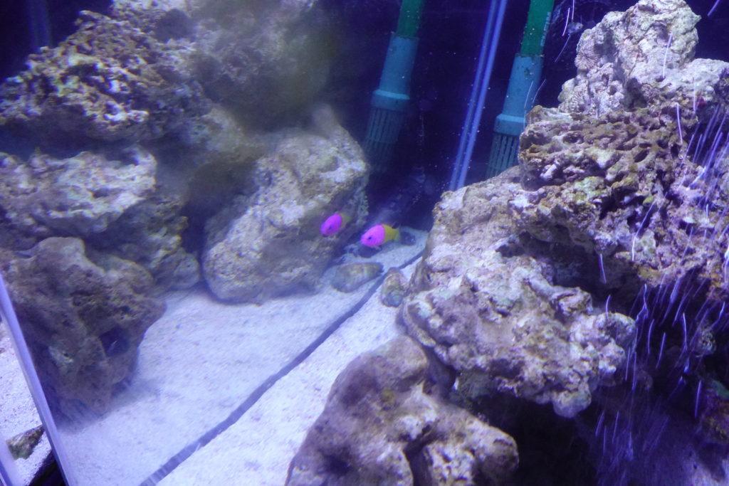 オービィ横浜 熱帯魚