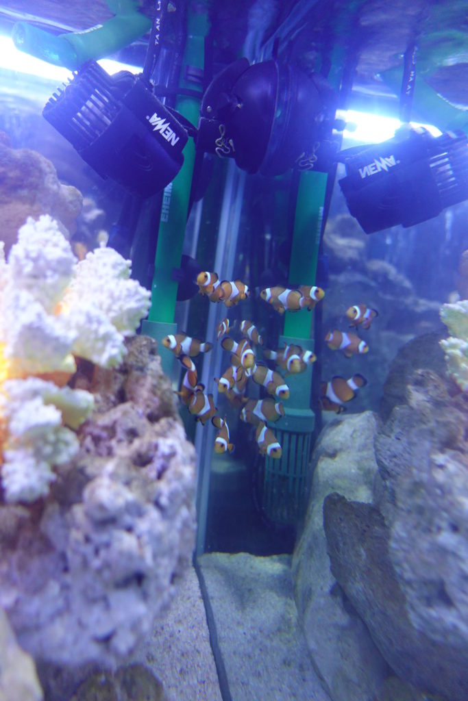 オービィ横浜 熱帯魚 ニモ